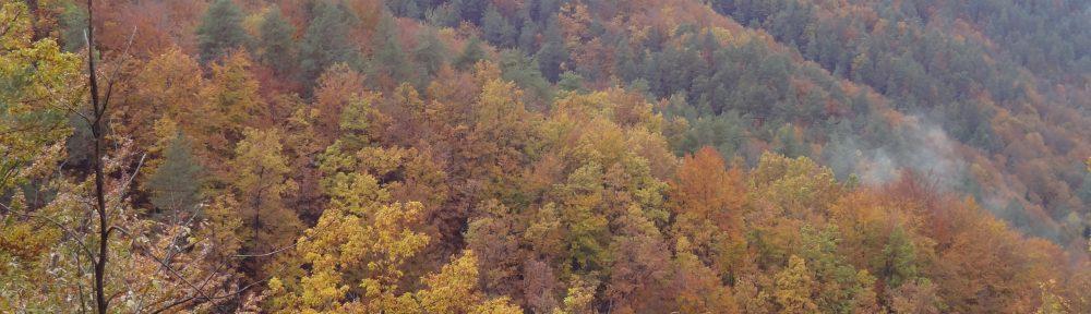 Kolokviji na Gozdarskem inštitutu Slovenije